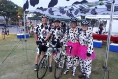 Cow Durban 1
